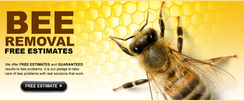 Bee Removal Service In San Diego, Riverside, Orange County & San Bernardino. Free Estimates for bee extermination, live bee removals, and bee prevention services.