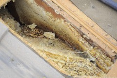 Honeycomb Exposed After Removing Roof Cover